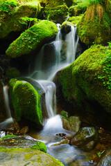 이끼와 폭포가 어울어진 숲속의 시원한 풍경,a cool view of the forest with moss and waterfalls.