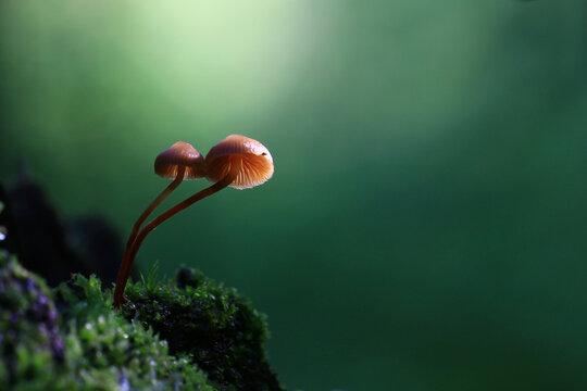 mushrooms forest nature season close