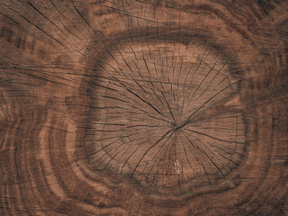 Acrylic Prints Firewood texture Wood slice, stump, brown wooden background. Cross section of the trunk of an oak grove shows growth rings.