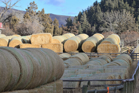 Round bales in a hay lot for use as cattle feed in bad weather