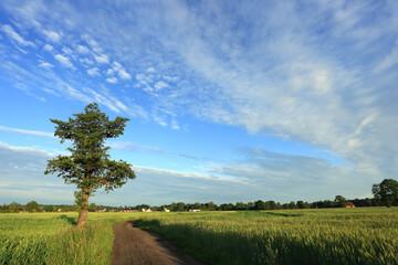 Krajobraz wiejski, polna droga, samotne drzewo i zielone pola na tle niebieskiego nieba z chmurami.