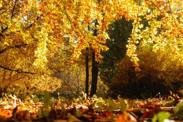 壁紙(ウォールミューラル) - Picturesque view of trees in warm light. Location place Ukraine, Europe.