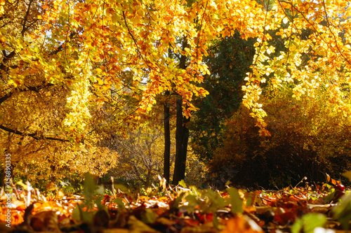 Wall mural Picturesque view of trees in warm light. Location place Ukraine, Europe.