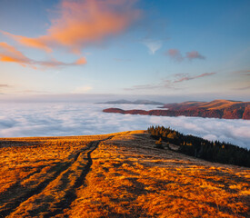 Wall Mural - Splendid view of the mountains covered with thick fog.