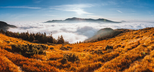 壁紙(ウォールミューラル) - Breathtaking morning moment in alpine foggy valley. Location place of Carpathian mountains, Ukraine, Europe.