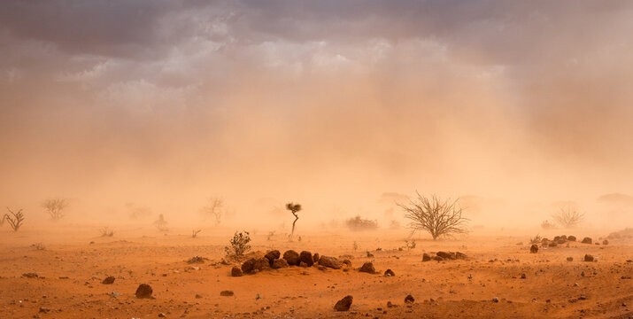Climate change in Africa concept: Yellow orange dusty sandstorm with rocks, sand, bushes and dark clouds. In  Somalia and Ethiopia drought impacts the environment and leads to migration and refugees.