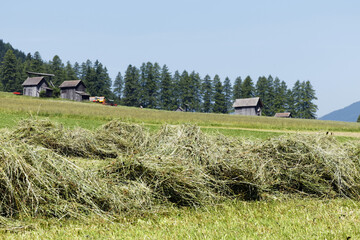 Making hay in alpine landscape in South Tyrol, Alps, Italy