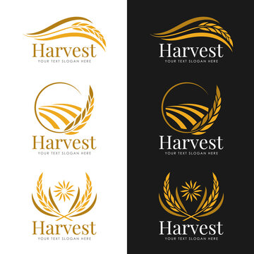 Yellow gold Harvest paddy rice logo vector collection design