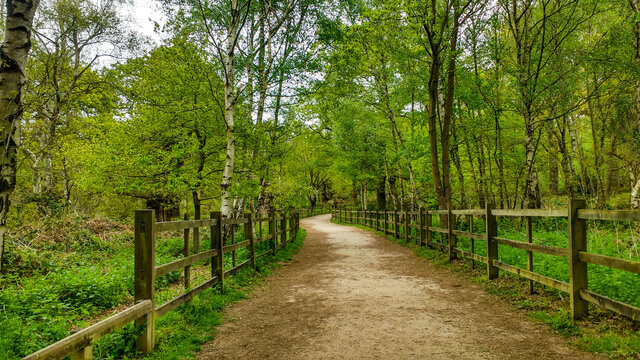 Sherwood, UK, May, 8, 2017, patchway to see Major Oak in Sherwood forrest as seen in early May with rich greenery.