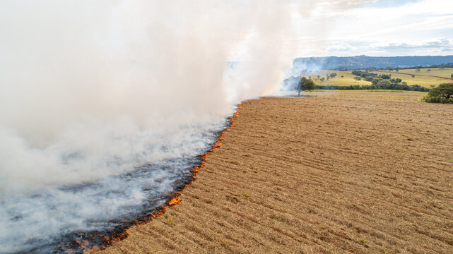 Dry grass burns, natural disaster. Aerial view. A large burnt field covered in black soot. Great smoke from burning places. Brazil. Sugar cane plantation.