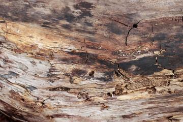Fotobehang Brandhout textuur Tree texture background