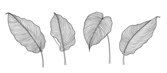 Fotobehang - Exotic tropical leaf hand drawn vector. Botanical leaves black and white engraved ink art. Design for fabric, textile print, wrapping paper, fashion, interior design and cover.