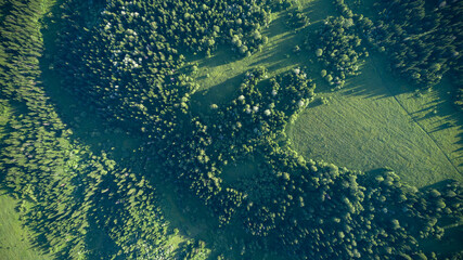 Aerial top: mountain forest, texture of meadow view from above. Drone's Eye - tree green background. high-quality back for design and layout, the concept of summer meadows bordering an array of trees Fotoväggar