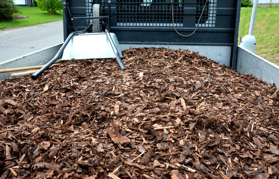 mulch bark from pieces of pine and spruce to prevent weeds from growing and germinating gardener carries it on the back of a delivery van man's hand evaluates the quality of pieces of mulch