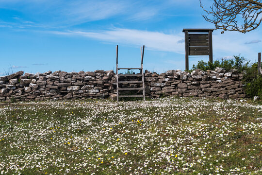 Wooden stile and blossom daisies by an old dry stone wall