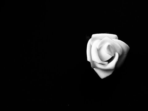 Capital letters with the text stop racism and a white rose against white background