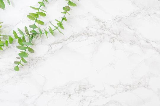 白い大理石とオリーブの背景素材
