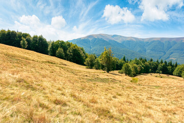 Wall Mural - grassy mountain meadow in summer. idyllic landscape on a sunny day. scenery rolling in to the distant ridge. beautiful blue sky with puffy clouds