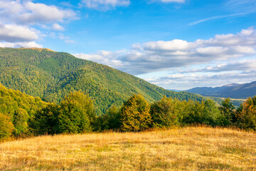 wonderful autumn landscape in evening light. open view with forest on the meadow in front of a distant valley. trees and yellowish grass on the hills. mountain ridge in the distance. blue sky
