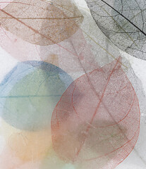 Wall Mural - Macro leaves background texture color. Transparent skeleton leaves, colorful beautiful image of nature, leaves on ice