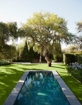 Lap pool in tranquil garden