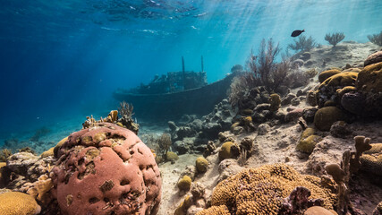 "Ship wreck ""Tugboat"" in  shallow water of coral reef in Caribbean sea / Curacao with view to surface and sunbeam"