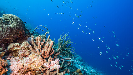 Seascape in turquoise water of coral reef in Caribbean Sea / Curacao with fish, coral and sponge Wall mural
