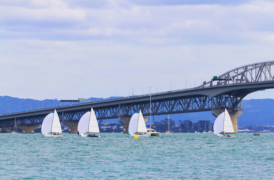 Sail Boats Race and  Harbour Bridge an Iconic Landmark in Auckland, New Zealand