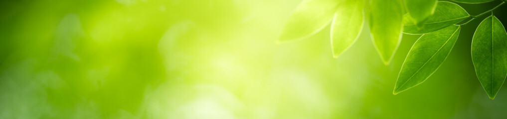 Nature of green leaf in garden using as background natural cover page