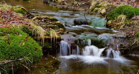 Photo sur Plexiglas Rivière de la forêt stream in the forest