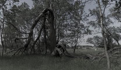 Obraz Z dala od zgiełku miasta  Tylko natura i ja - fototapety do salonu