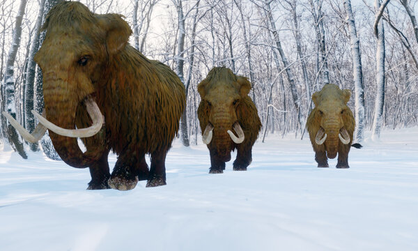 A 3D illustration of a herd of Woolly Mammoths walking through a snowy forest