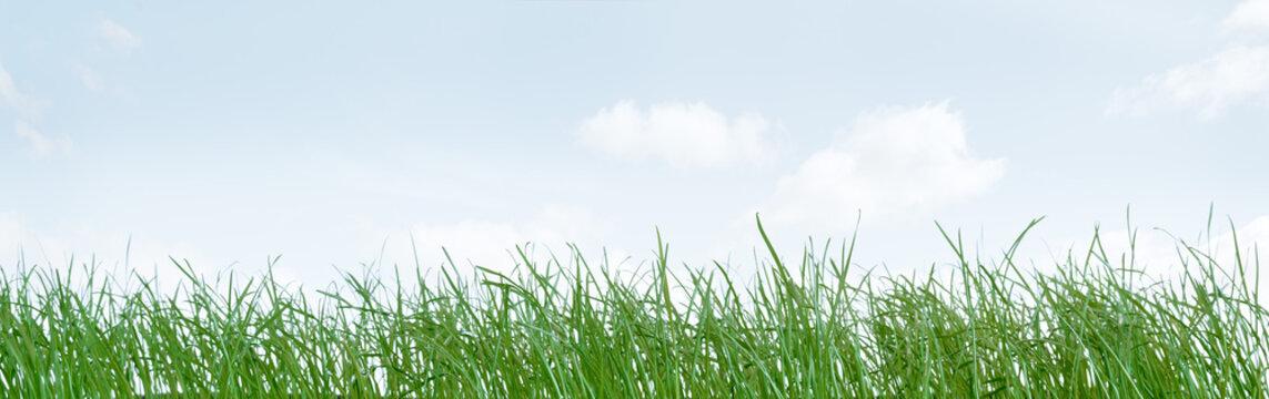 Grass against blue cloudy sky
