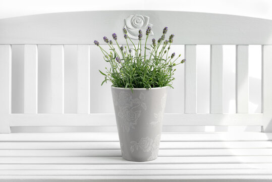 Lavender plant in ceramic pot on a white bench.