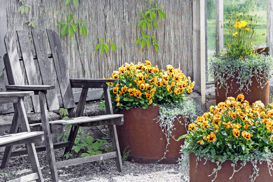 Old garden armchair and flowerpot with pansies.