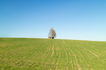 Wall Mural - Alone tree and house on a green fiels under blue sky, Austria.