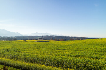 Wall Mural - Autumn landscape with green farm agricultural fields and blue sky, Austria.