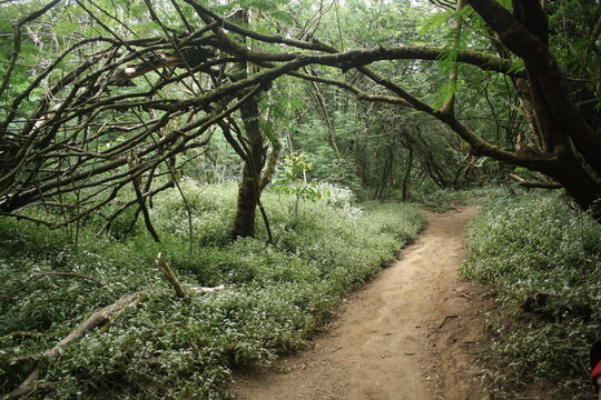 Beauty scenery of forest from Mount Ciremai track via Palutungan, West Java, Indonesia.