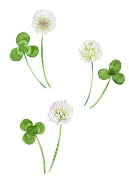 クローバーの花と葉っぱ セット 水彩イラスト
