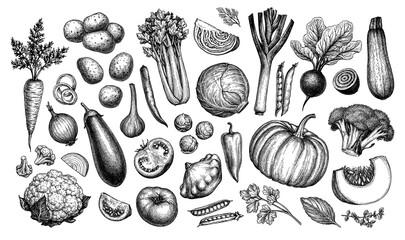 Big set of vegetables.