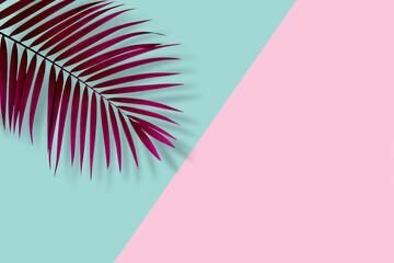 Wall Mural - top view of tropical palm leaf on blue and pink color background. minimal summer concept. flat lay