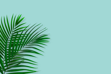 Wall Mural - top view of tropical palm leaf on blue color background. minimal summer concept. flat lay
