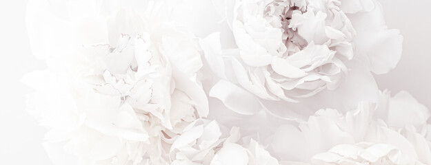 Obraz Pure white peony flowers as floral art background, wedding decor and luxury branding - fototapety do salonu