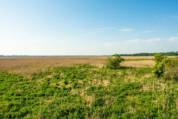 Narew Podlasie Podlaskie Narwiański Park Narodowy  Łąka trawa trzcina przyroda - fototapety na wymiar