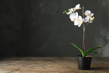 Tuinposter Orchidee Artificial orchid plant in flower pot on wooden table. Space for text