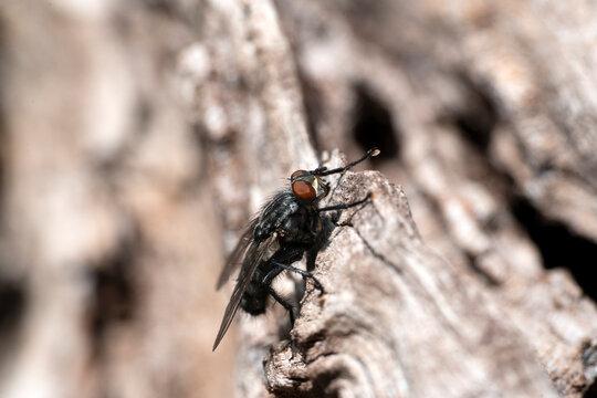 fly on cherry tree bark macro