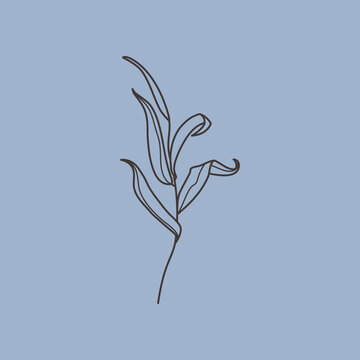 Willow branch with leaves in a trendy minimalistic style. Outline of a botanical design elements. Vector illustration.