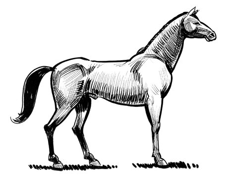 Standing horse ink black and white drawing