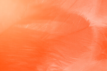 Wall Mural - Beautiful orange-white colors trend feather texture background, trends color