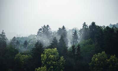 Mischwald im Nebel - Banner mit viel Textfreiraum